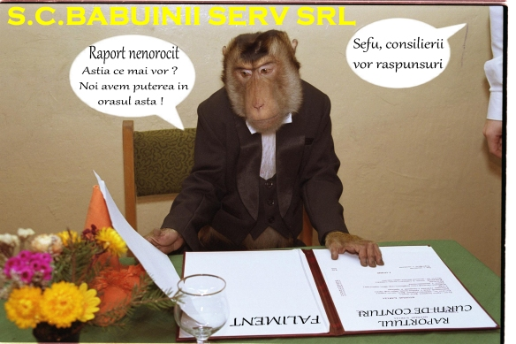 babuin 4